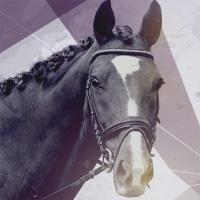 horsethumb200
